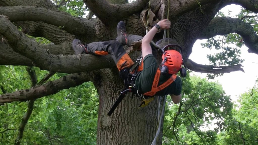 Arborist Consultations-Palm Beach Island Tree Trimming and Tree Removal Services-We Offer Tree Trimming Services, Tree Removal, Tree Pruning, Tree Cutting, Residential and Commercial Tree Trimming Services, Storm Damage, Emergency Tree Removal, Land Clearing, Tree Companies, Tree Care Service, Stump Grinding, and we're the Best Tree Trimming Company Near You Guaranteed!