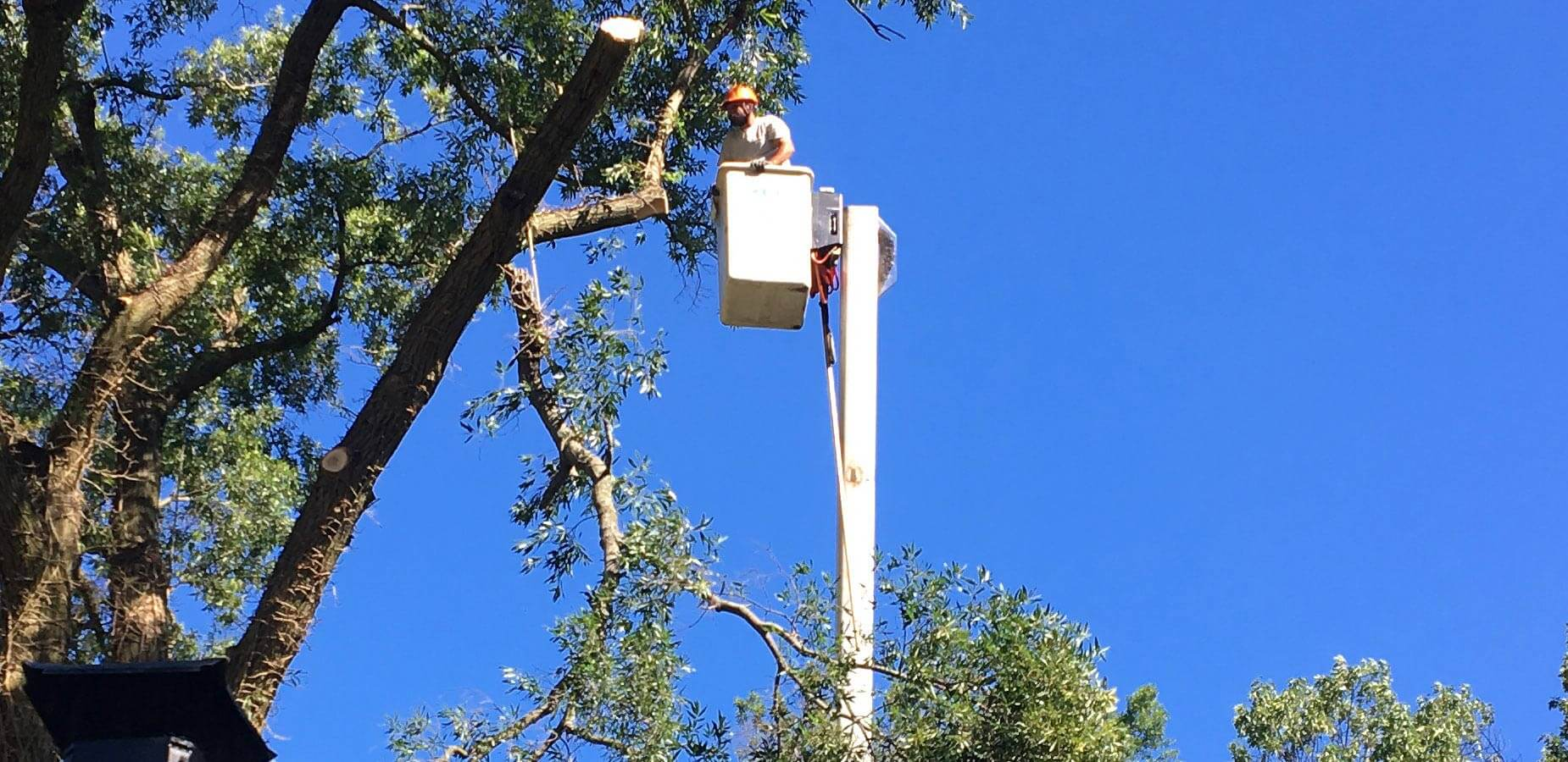 Commercial Tree Services-Palm Beach Island Tree Trimming and Tree Removal Services-We Offer Tree Trimming Services, Tree Removal, Tree Pruning, Tree Cutting, Residential and Commercial Tree Trimming Services, Storm Damage, Emergency Tree Removal, Land Clearing, Tree Companies, Tree Care Service, Stump Grinding, and we're the Best Tree Trimming Company Near You Guaranteed!