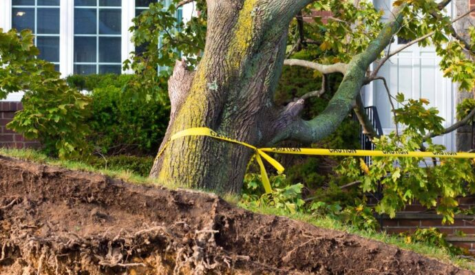 Emergency Tree Removal-Palm Beach Island Tree Trimming and Tree Removal Services-We Offer Tree Trimming Services, Tree Removal, Tree Pruning, Tree Cutting, Residential and Commercial Tree Trimming Services, Storm Damage, Emergency Tree Removal, Land Clearing, Tree Companies, Tree Care Service, Stump Grinding, and we're the Best Tree Trimming Company Near You Guaranteed!
