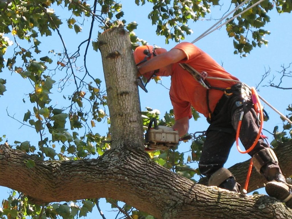 Palm Beach Island Tree Trimming and Tree Removal Services Header-We Offer Tree Trimming Services, Tree Removal, Tree Pruning, Tree Cutting, Residential and Commercial Tree Trimming Services, Storm Damage, Emergency Tree Removal, Land Clearing, Tree Companies, Tree Care Service, Stump Grinding, and we're the Best Tree Trimming Company Near You Guaranteed!