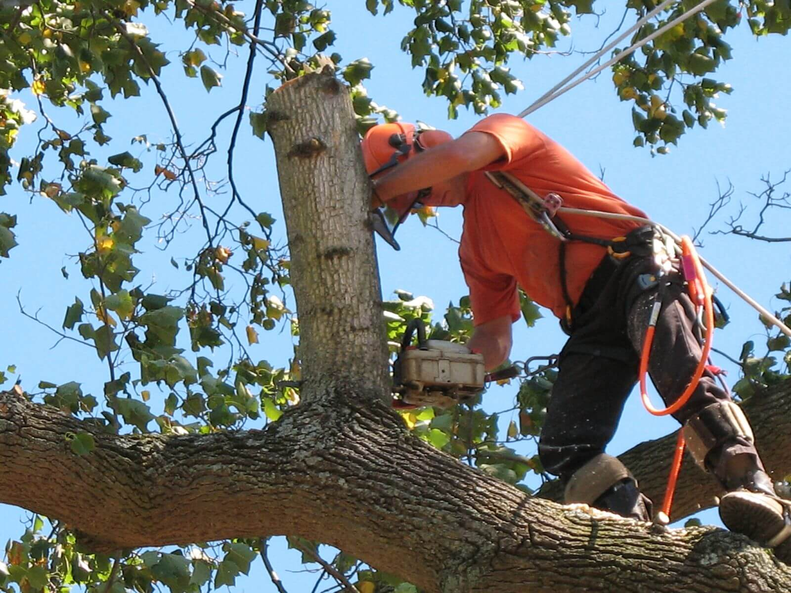 Palm Beach Island Tree Trimming and Tree Removal Services