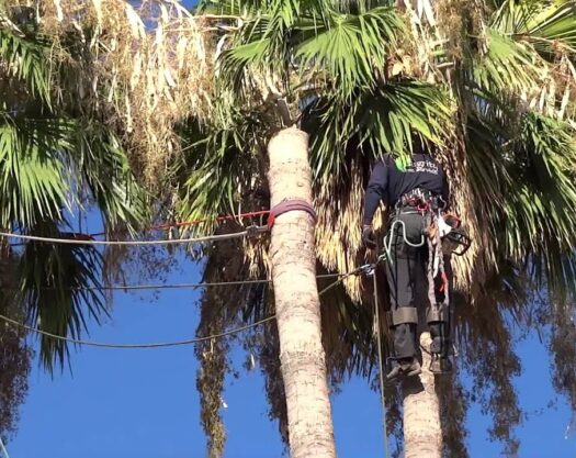 Palm Tree Removal-Palm Beach Island Tree Trimming and Tree Removal Services-We Offer Tree Trimming Services, Tree Removal, Tree Pruning, Tree Cutting, Residential and Commercial Tree Trimming Services, Storm Damage, Emergency Tree Removal, Land Clearing, Tree Companies, Tree Care Service, Stump Grinding, and we're the Best Tree Trimming Company Near You Guaranteed!