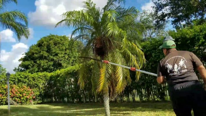 Palm Tree Trimming & Palm Tree Removal-Palm Beach Island Tree Trimming and Tree Removal Services-We Offer Tree Trimming Services, Tree Removal, Tree Pruning, Tree Cutting, Residential and Commercial Tree Trimming Services, Storm Damage, Emergency Tree Removal, Land Clearing, Tree Companies, Tree Care Service, Stump Grinding, and we're the Best Tree Trimming Company Near You Guaranteed!