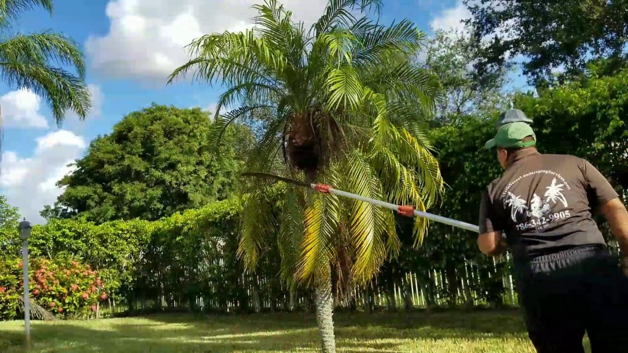 Palm Tree Trimming-Palm Beach Island Tree Trimming and Tree Removal Services-We Offer Tree Trimming Services, Tree Removal, Tree Pruning, Tree Cutting, Residential and Commercial Tree Trimming Services, Storm Damage, Emergency Tree Removal, Land Clearing, Tree Companies, Tree Care Service, Stump Grinding, and we're the Best Tree Trimming Company Near You Guaranteed!