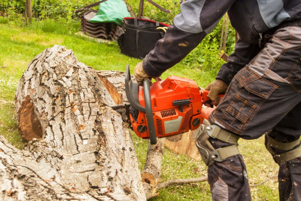 Stump Removal-Palm Beach Island Tree Trimming and Tree Removal Services-We Offer Tree Trimming Services, Tree Removal, Tree Pruning, Tree Cutting, Residential and Commercial Tree Trimming Services, Storm Damage, Emergency Tree Removal, Land Clearing, Tree Companies, Tree Care Service, Stump Grinding, and we're the Best Tree Trimming Company Near You Guaranteed!