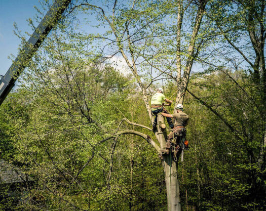 Tree Bracing & Tree Cabling-Palm Beach Island Tree Trimming and Tree Removal Services-We Offer Tree Trimming Services, Tree Removal, Tree Pruning, Tree Cutting, Residential and Commercial Tree Trimming Services, Storm Damage, Emergency Tree Removal, Land Clearing, Tree Companies, Tree Care Service, Stump Grinding, and we're the Best Tree Trimming Company Near You Guaranteed!