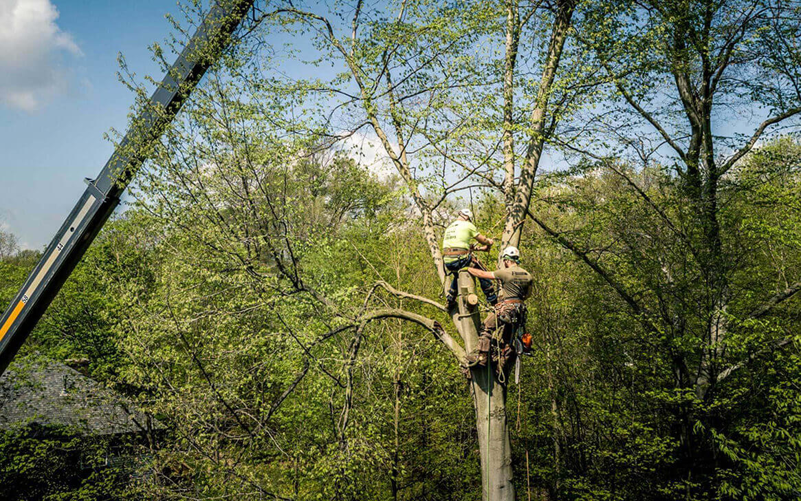 Tree Bracing and Cabling-Palm Beach Island Tree Trimming and Tree Removal Services-We Offer Tree Trimming Services, Tree Removal, Tree Pruning, Tree Cutting, Residential and Commercial Tree Trimming Services, Storm Damage, Emergency Tree Removal, Land Clearing, Tree Companies, Tree Care Service, Stump Grinding, and we're the Best Tree Trimming Company Near You Guaranteed!