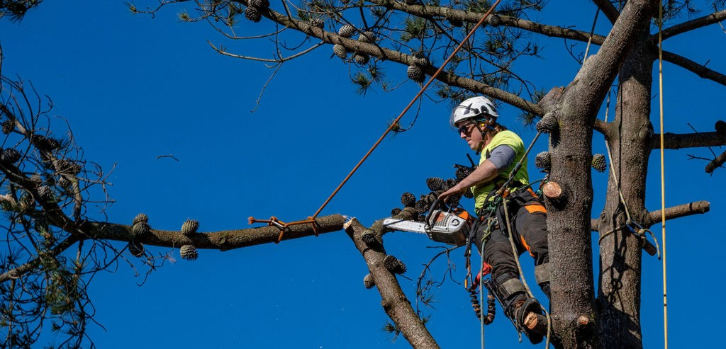 Tree Cutting-Palm Beach Island Tree Trimming and Tree Removal Services-We Offer Tree Trimming Services, Tree Removal, Tree Pruning, Tree Cutting, Residential and Commercial Tree Trimming Services, Storm Damage, Emergency Tree Removal, Land Clearing, Tree Companies, Tree Care Service, Stump Grinding, and we're the Best Tree Trimming Company Near You Guaranteed!