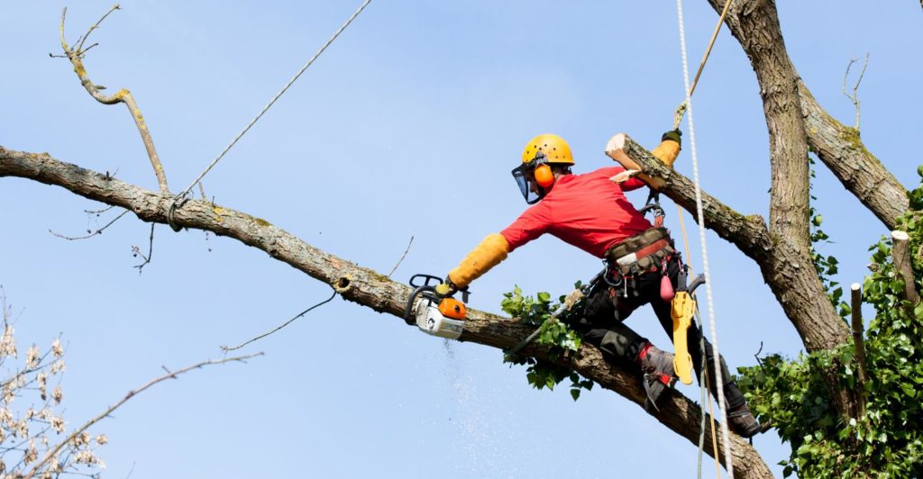 Tree Trimming-Palm Beach Island Tree Trimming and Tree Removal Services-We Offer Tree Trimming Services, Tree Removal, Tree Pruning, Tree Cutting, Residential and Commercial Tree Trimming Services, Storm Damage, Emergency Tree Removal, Land Clearing, Tree Companies, Tree Care Service, Stump Grinding, and we're the Best Tree Trimming Company Near You Guaranteed!