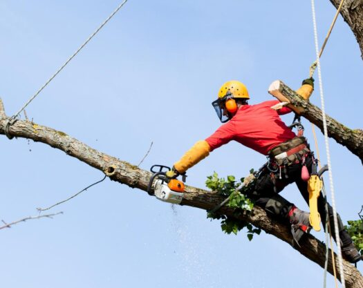 Tree Trimming Services-Palm Beach Island Tree Trimming and Tree Removal Services-We Offer Tree Trimming Services, Tree Removal, Tree Pruning, Tree Cutting, Residential and Commercial Tree Trimming Services, Storm Damage, Emergency Tree Removal, Land Clearing, Tree Companies, Tree Care Service, Stump Grinding, and we're the Best Tree Trimming Company Near You Guaranteed!